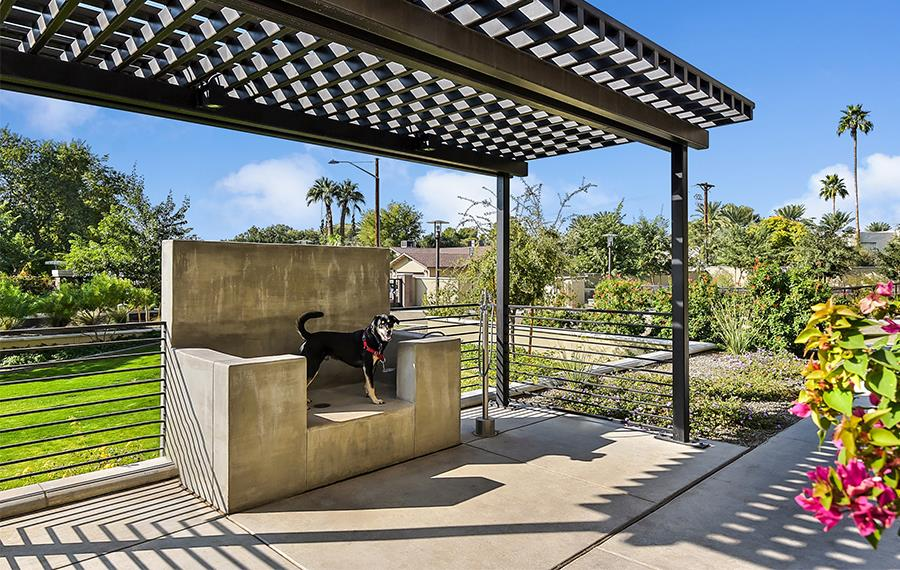 New Apartments in Phoenix - Citrine - Pet Spa