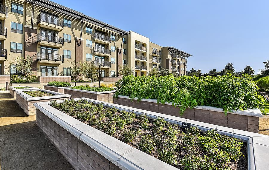1 bedroom apartments in Phoenix AZ - Citrine Apartments - Community herb garden