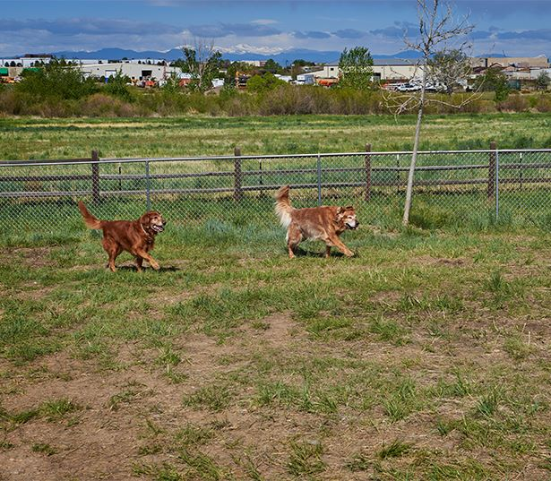 Aurora apartments for rent near Rocky Vista University - Coyote Ranch Pet Park