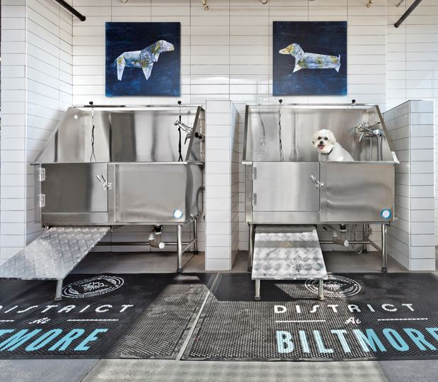 Apartments for rent in Phoenix - District at Biltmore dog wash